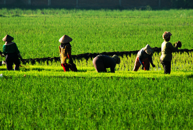 Petani Miskin Jawa Tidak Lakukan Jual Beli Tanah Garapan P